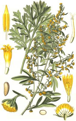Artemisia Absinthium Print
